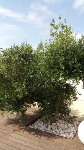 perpignan olivier avant