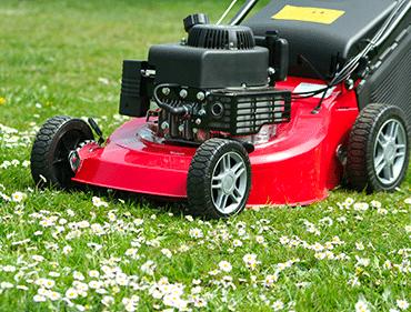 tonte et entretien pelouse