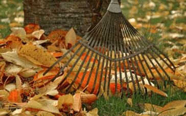 image Comment entretenir son jardin en automne ?